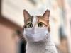 사람 통해 반려동물 코로나19 바이러스 감염확인… 방역 대안은?