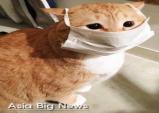 코로나19 바이러스 감염으로 반려동물도 방역 적신호